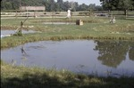 BFEC Replicate ponds