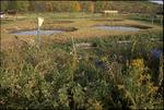 BFEC Fall Ponds, bluebird house