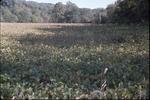 Soybean field-KCES-Shade