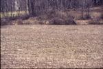Macon field to start prarie