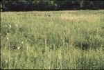 Prarie view with indiangrass