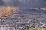 Prarie burn, burned black line by Pat Heithaus and Ray Heithaus