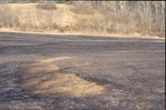 Prarie Burn-BFEC, Post Burn by Pat Heithaus and Ray Heithaus