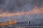 Prarie Burn, head fire 3 by Pat Heithaus and Ray Heithaus