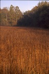 Indian grass field in early sun