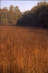 Indian grass field in early sun