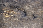 Prarie Burn BFEC Deer Carcass by Pat Heithaus and Ray Heithaus