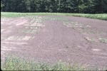 Beth Schiller's garden plots KCES