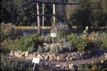 Medicinal Garden-back, portal KCES