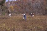 Fall Seed Walk, dispersing seeds in prarie