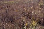 Fall seed walk, Prarie