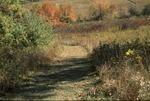 BFEC Fall colors down hill