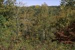 BFEC Fall woodland canopy