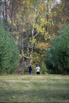 BFEC 15' Pines