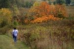 BFEC Pat-Fall Colors