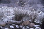 KCES 1st snow, grass