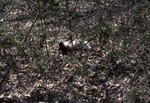 Skunk Bio Preserve