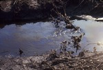 Oil on ditch to Kokosing Road, Mt. Vernon, Ohio