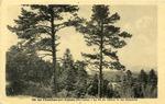 """Postcard, """"Le Chambon-sur-Lignon -- Le Pic du Lizieux vu des Barandons"""""""