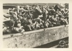 Army Signal Corps Photo of Nazi Atrocities