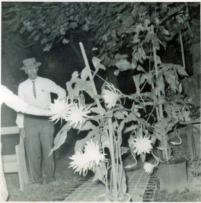 Charles Turner shows his nightblooming cereus