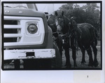 Amish Horses with Truck