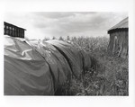 Covered Hay Bales