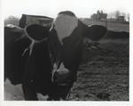 Orsborn Dairy Farm