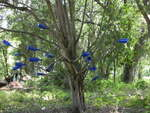 Wallace Road Bottle Tree