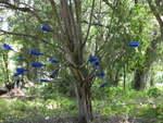 Wallace Road Bottle Tree