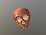 La Quina 18 juvenile cranium (Homo neanderthalensis)