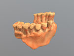 La Quina 5 maxilla fragment (Homo sapiens neanderthalensis)