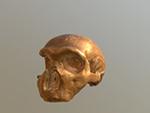 Monte Circeo I cranium (Neanderthal)