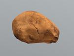 Skhul 1 cranium (juvenile) (transitional H. sapiens)