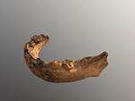 Skhul 1 mandible (juvenile) (transitional H. sapiens)