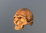 Predmosti (H. sapiens)