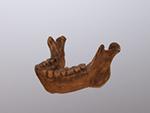 Choukoutien (Lower Cave- Locus G-1) mandible (Homo erectus)