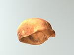 Spy- calotte (Neanderthal)