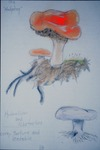 """Hand-colored drawing from the book: """"The Hedgehog"""" by Brenda Young, Chris Grasso, and Lori Liggett"""