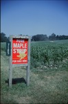 "Painted metal sign: ""PURE MAPLE SYRUP FOR SALE HERE"" with standardizedgreen metal ""7185"" address marker affixed."