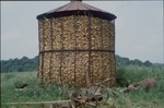 Image of a full and corn crib that were located on Mr. Dan Miller's property