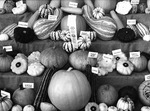 Dan Younger, Horticultural Display, Ohio State Fair, Columbus, OH, 1994-1997
