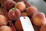 Peaches at the Owl Creek Auction