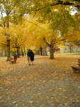 Middle Path During Golden Autumn