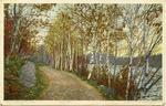 Birch Drive - A Northern Autumn